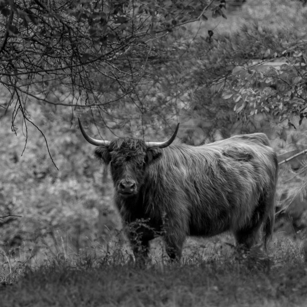 Woodland guardian eql0dw