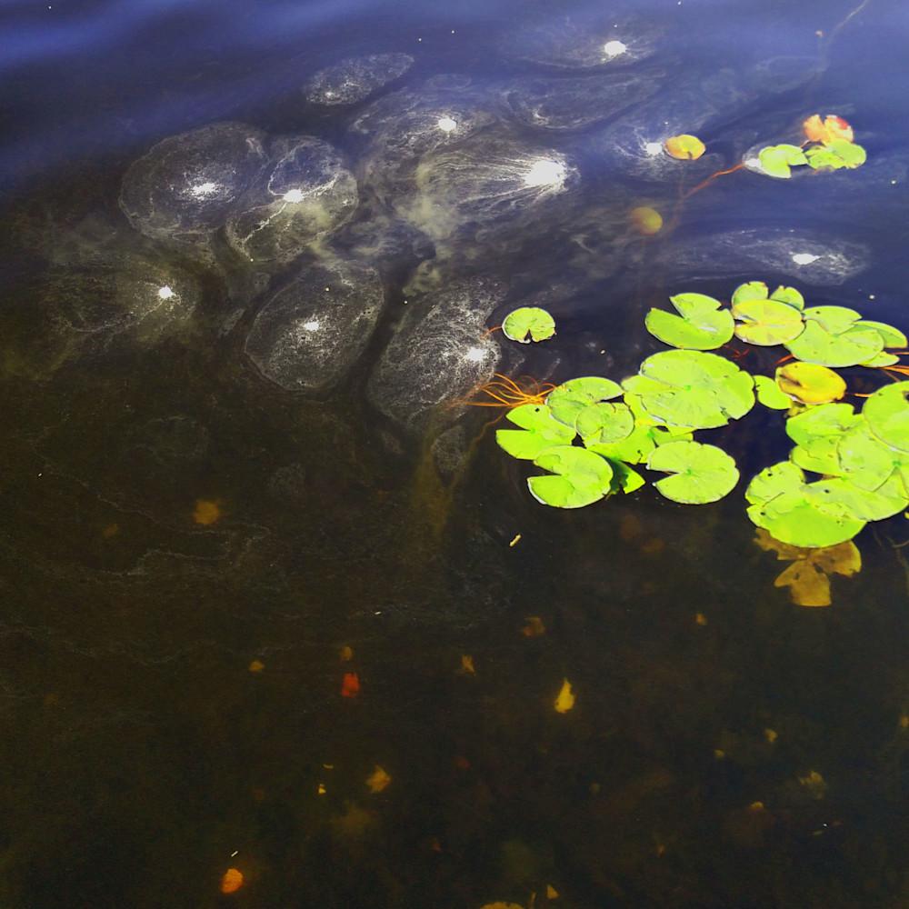 Blog water efcamu
