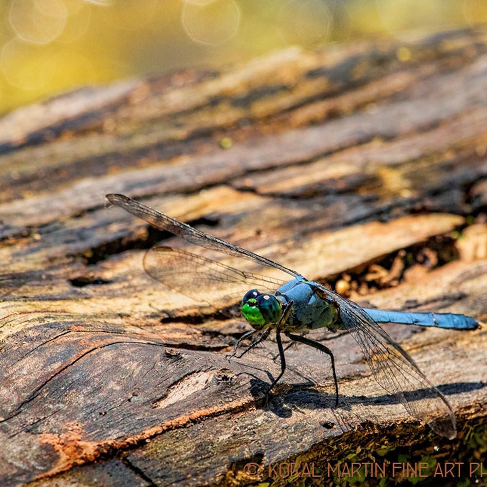 Dragon fly log 1518 ibwcd8