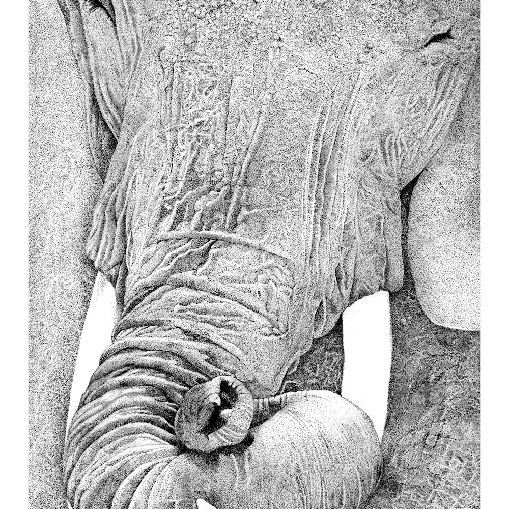 Tuskany smiling elephant z2wsrk