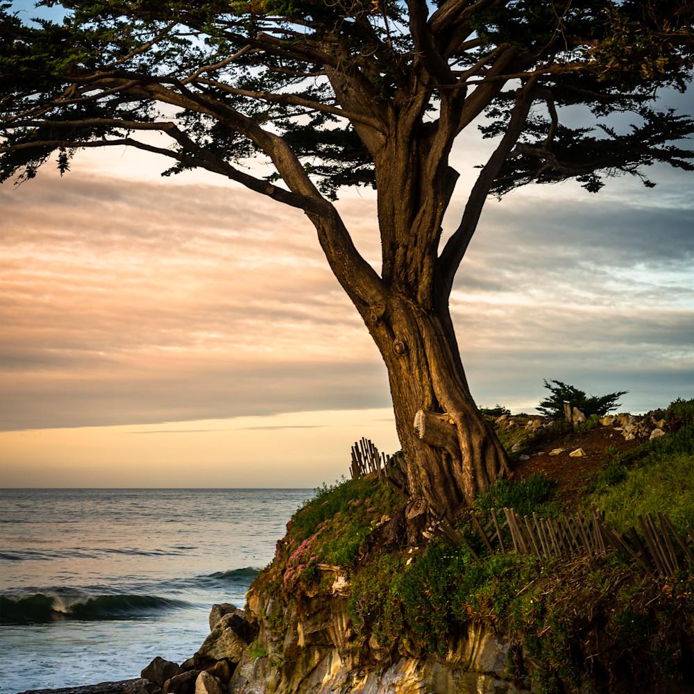 12x18 cypress tree racwvt