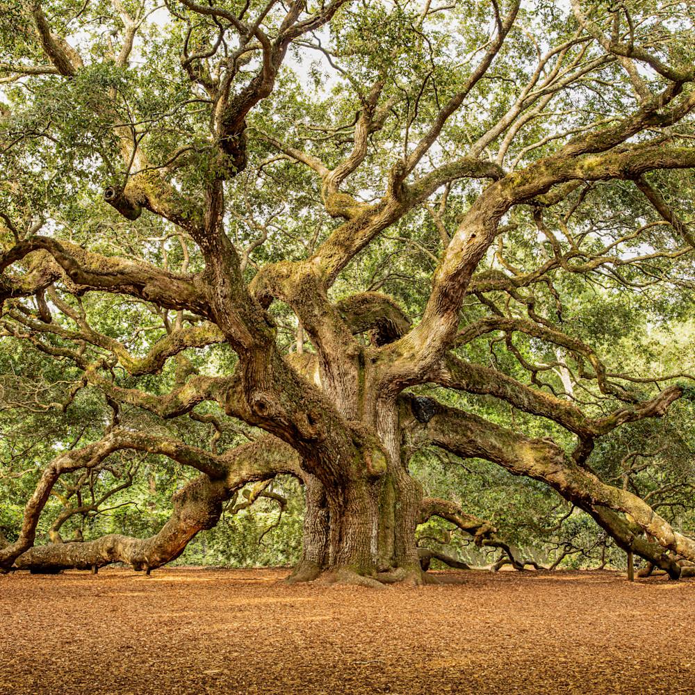 Angel oak 01 rhzjoa
