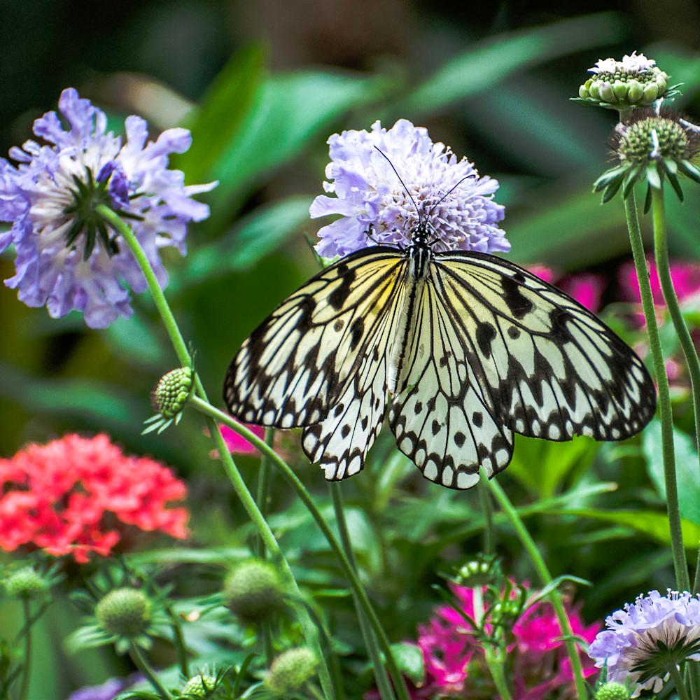 White butterfly in garden qwhuhx