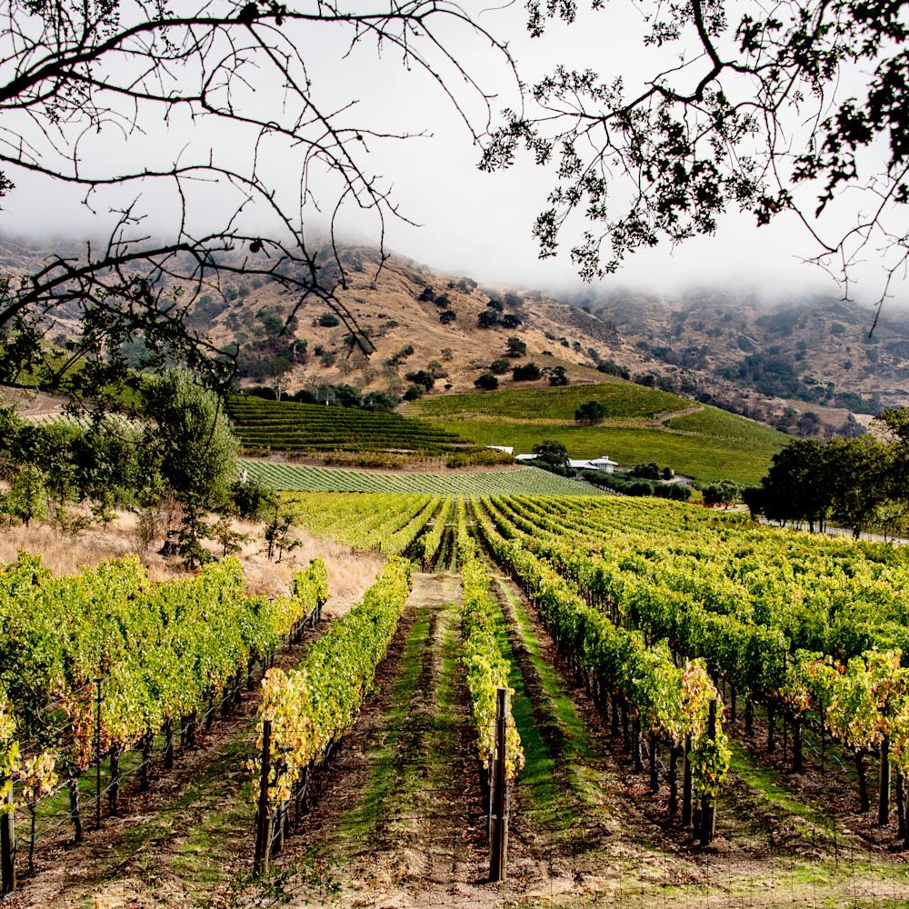 Napa valley vineyard kdxese