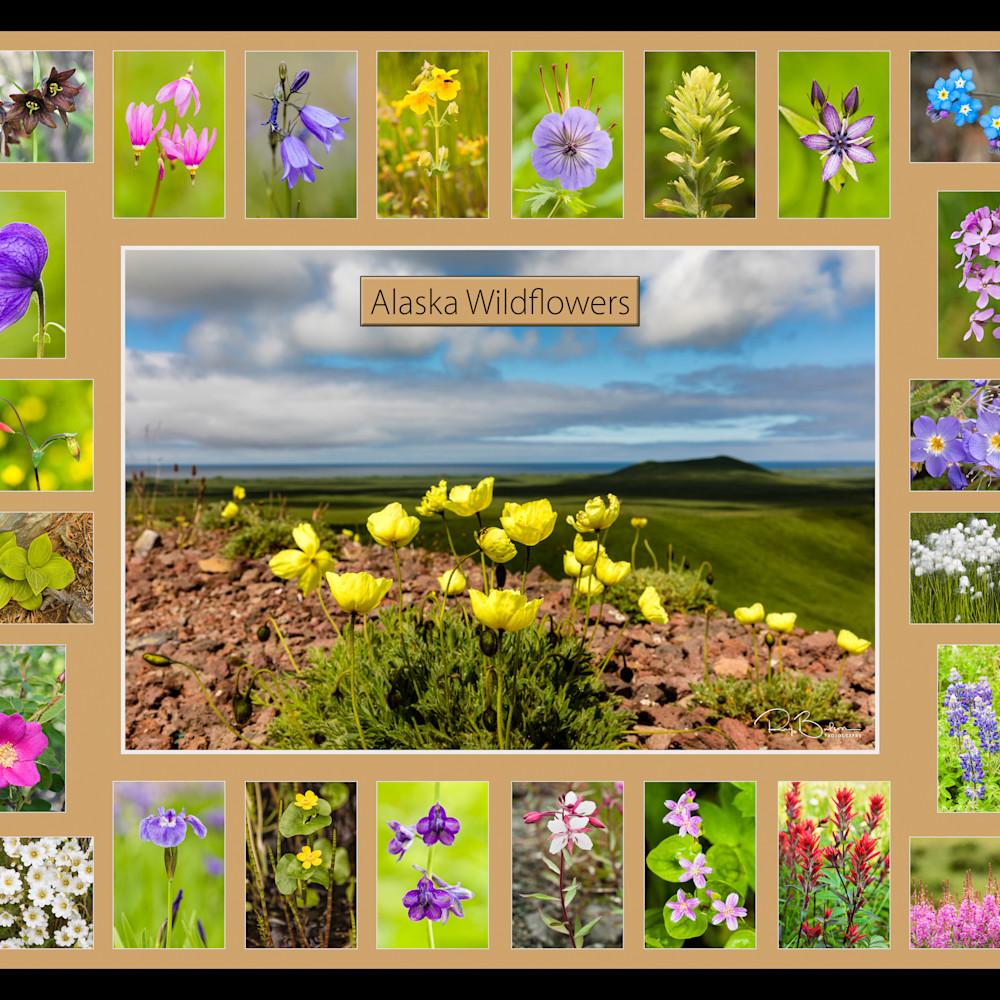 Alaska wildflowers no identification artstorefronts bzjhp5