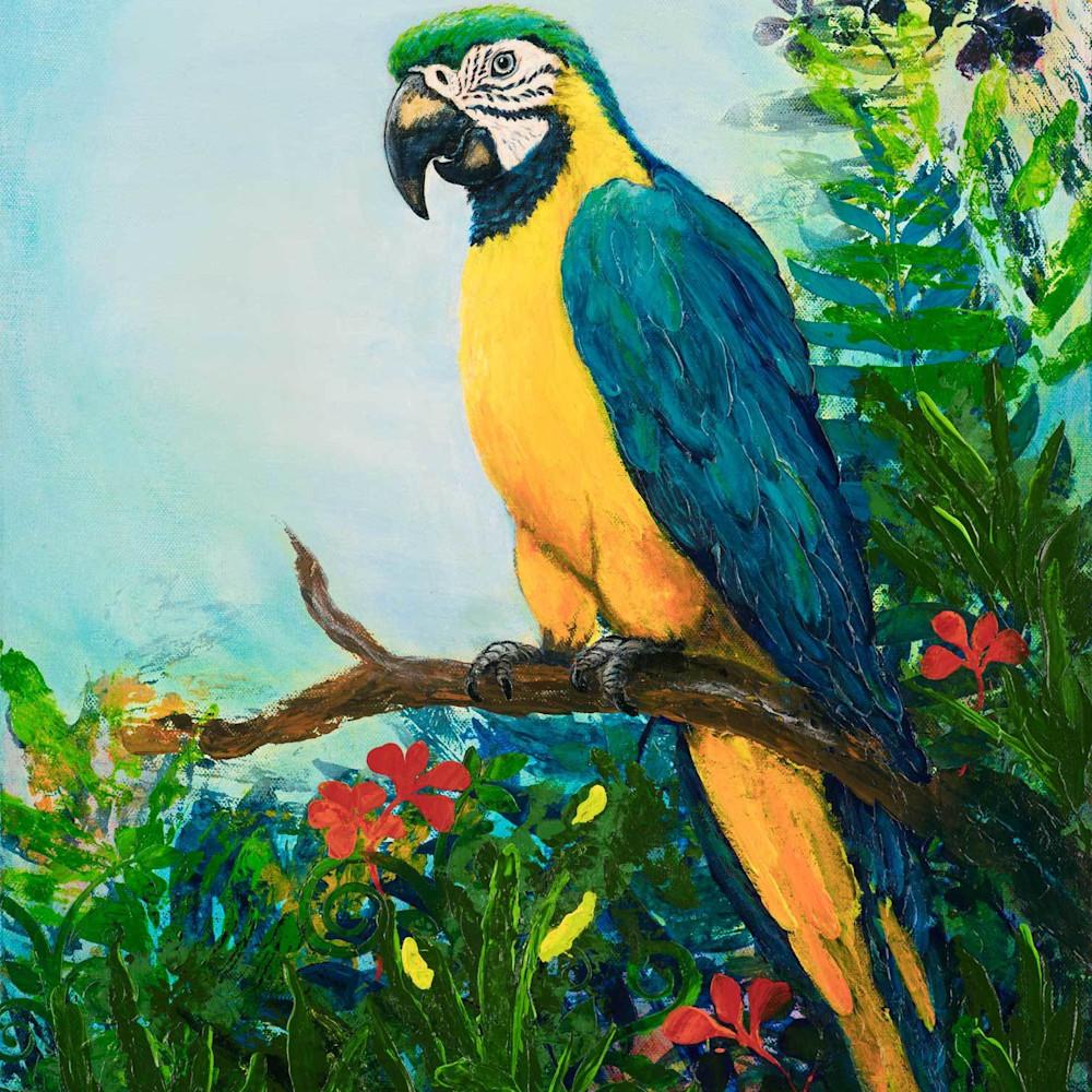 E weller 016 ara araruana macaw tcooho