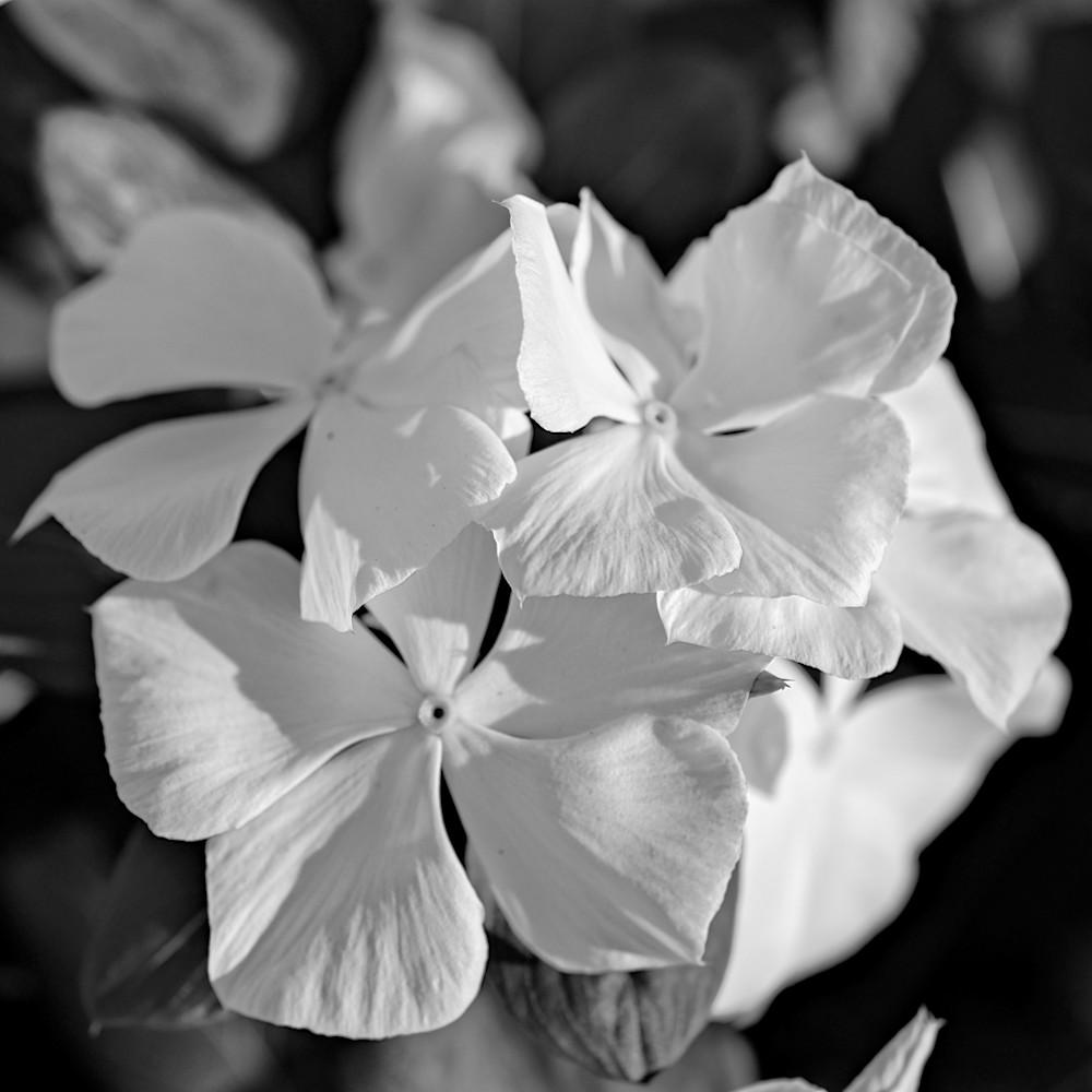 July flowers 9 zadef1