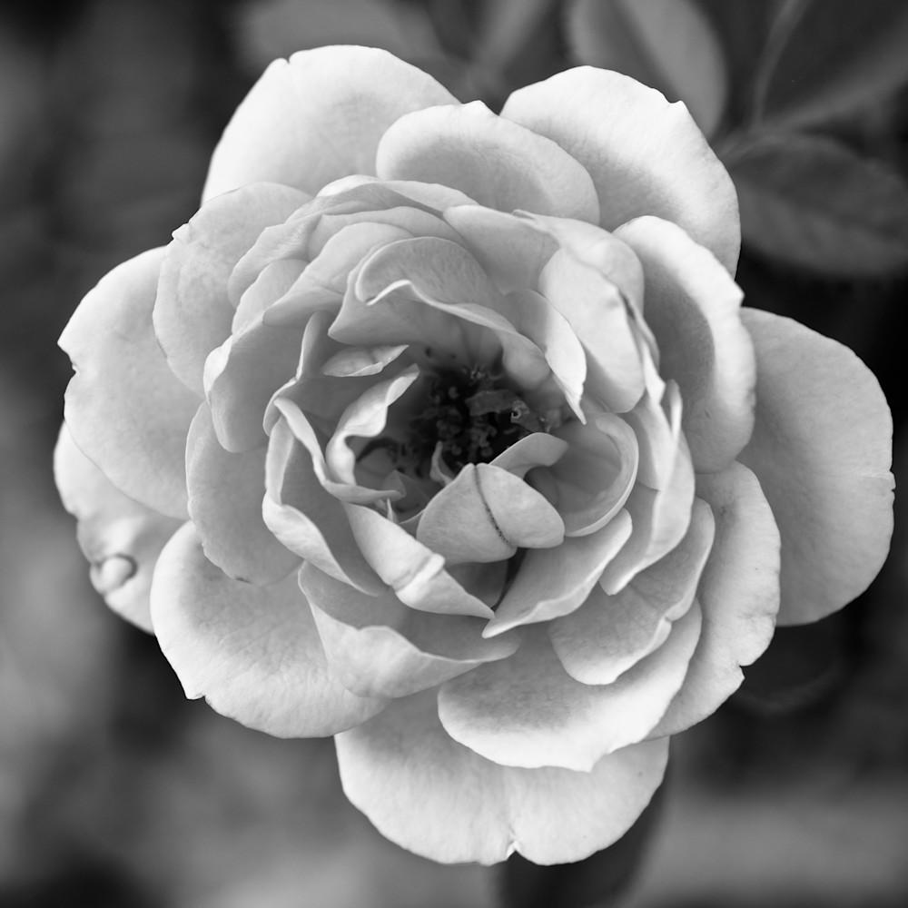 July flowers 43 vfsedi