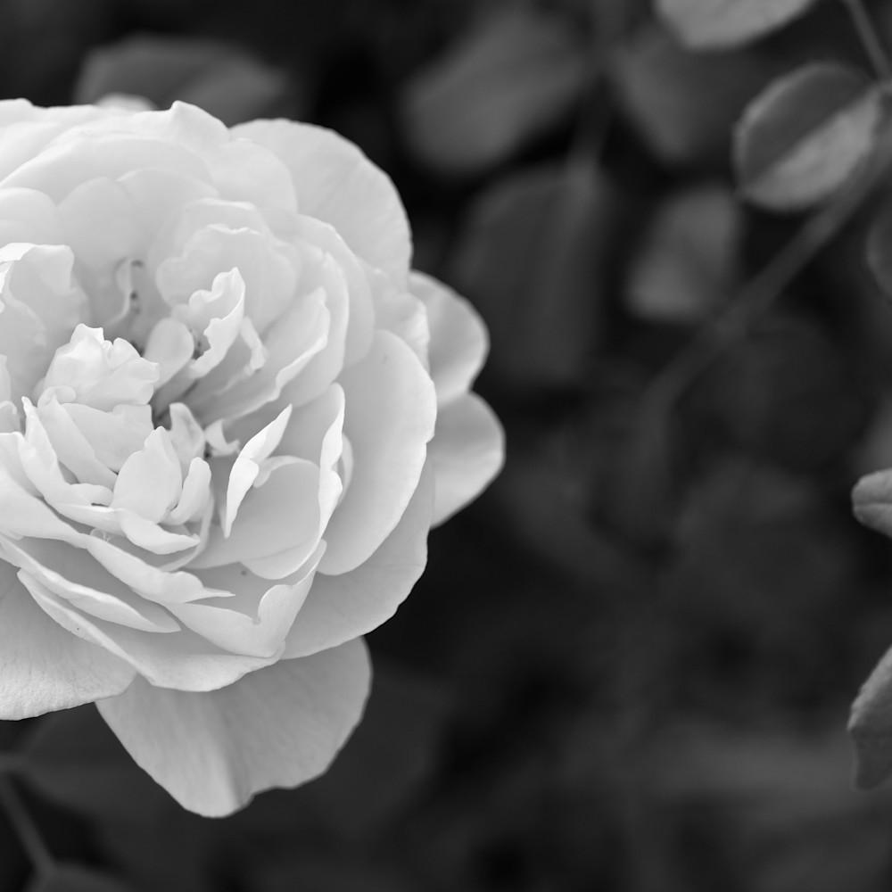 July flowers 53 kfleup