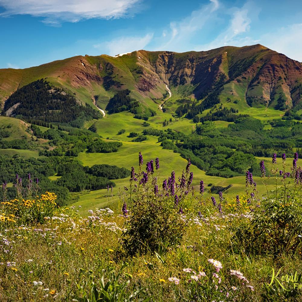Wildflowers mountains snodgrass 6734 c koral martin dgwa1f
