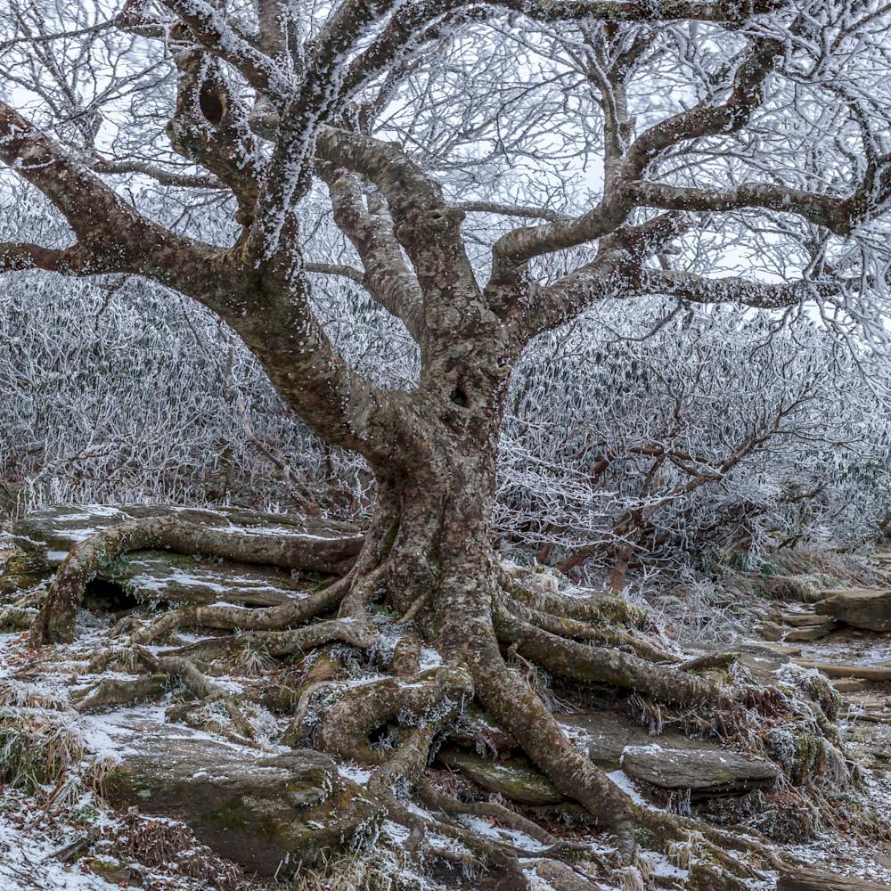 Frozen birch ahz5w6