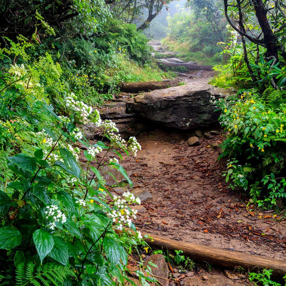 Summer trail mlmhlh