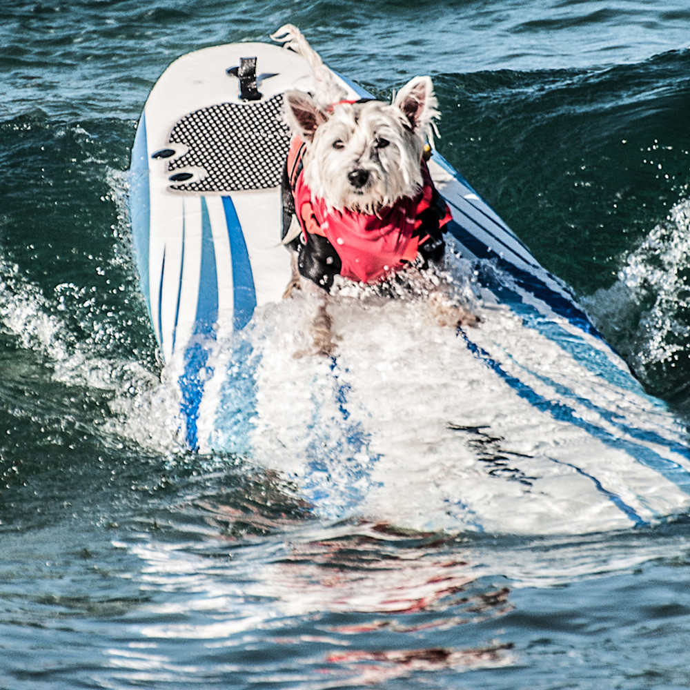 Surf dog 2 fjd1hb