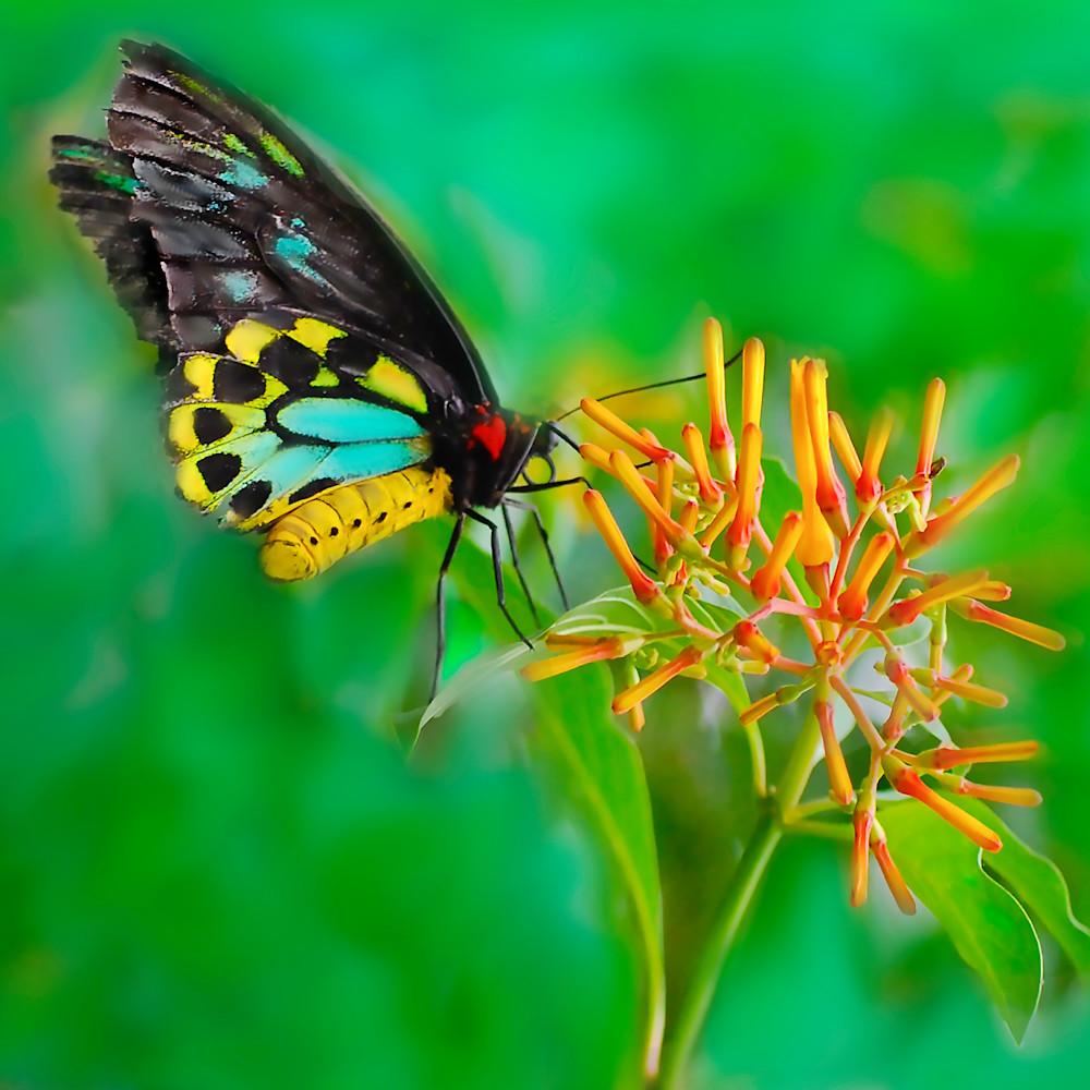 I heart butterfly lg ok0xnw