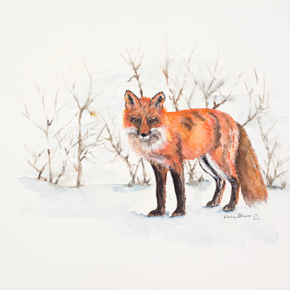The winter fox hires rq3rdx