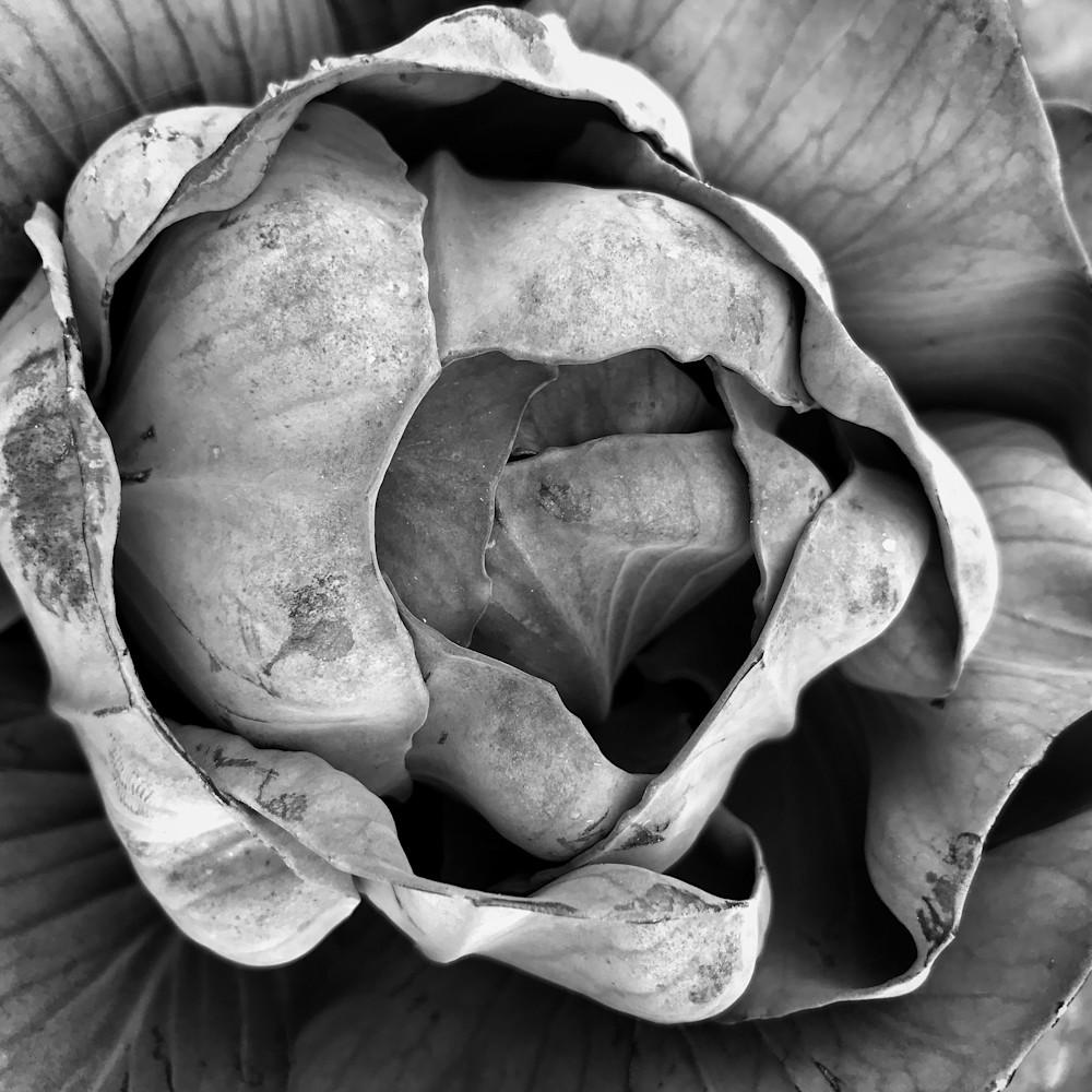 Cabbage 20171021 092639 mc 002 rub4f7