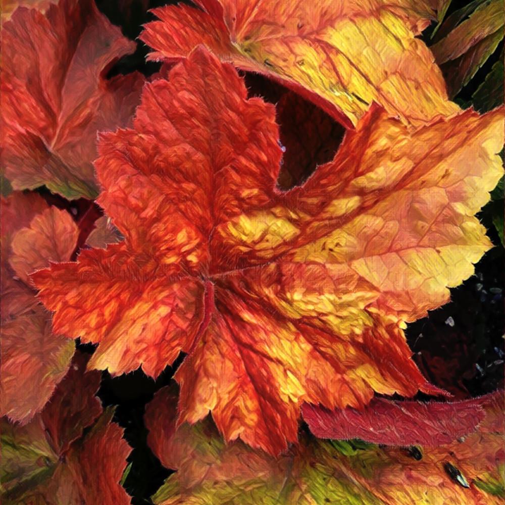 Heuchera   florallusions  111217 gibaqx
