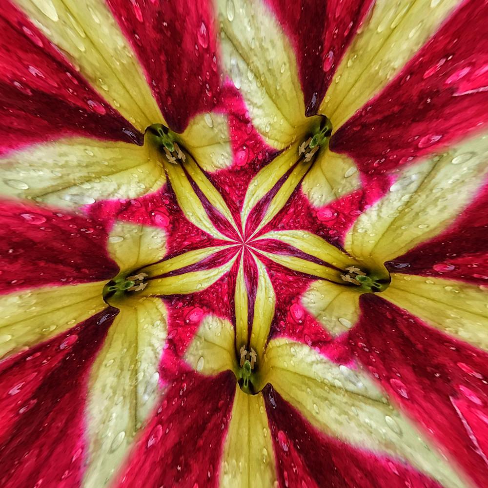 Petunia 0609 3711 fdqfyv