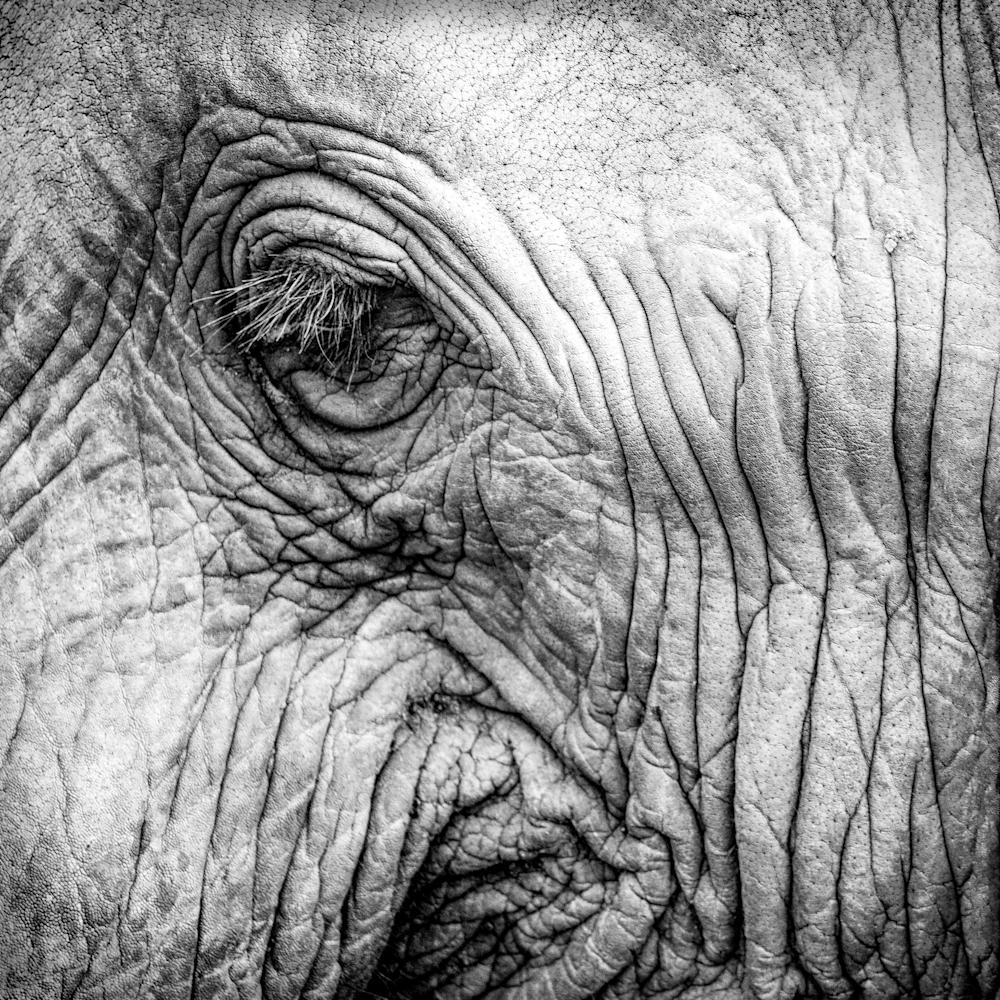 Elephant closeup  b wdsc05517 002 asf nvimhb