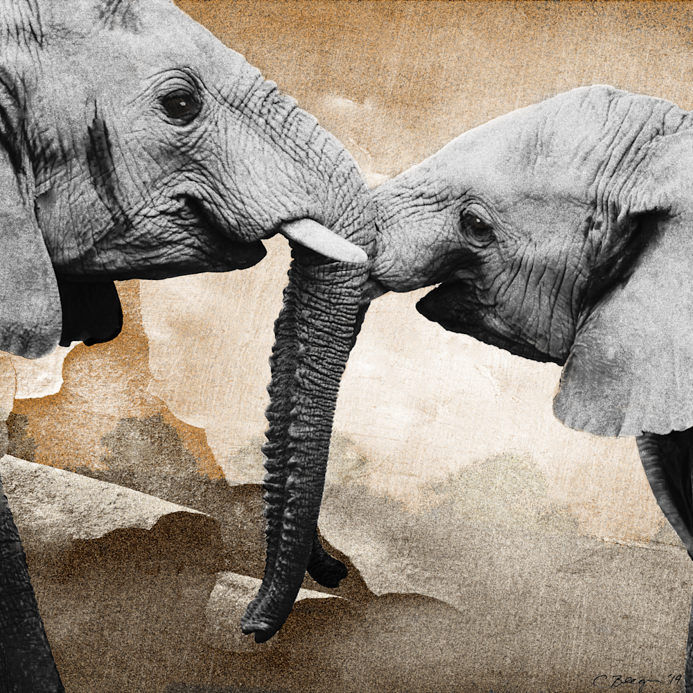 Elephant love img 1373 003 aloseu