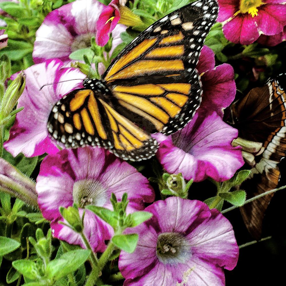Flower garden and butterfly ykrpp9