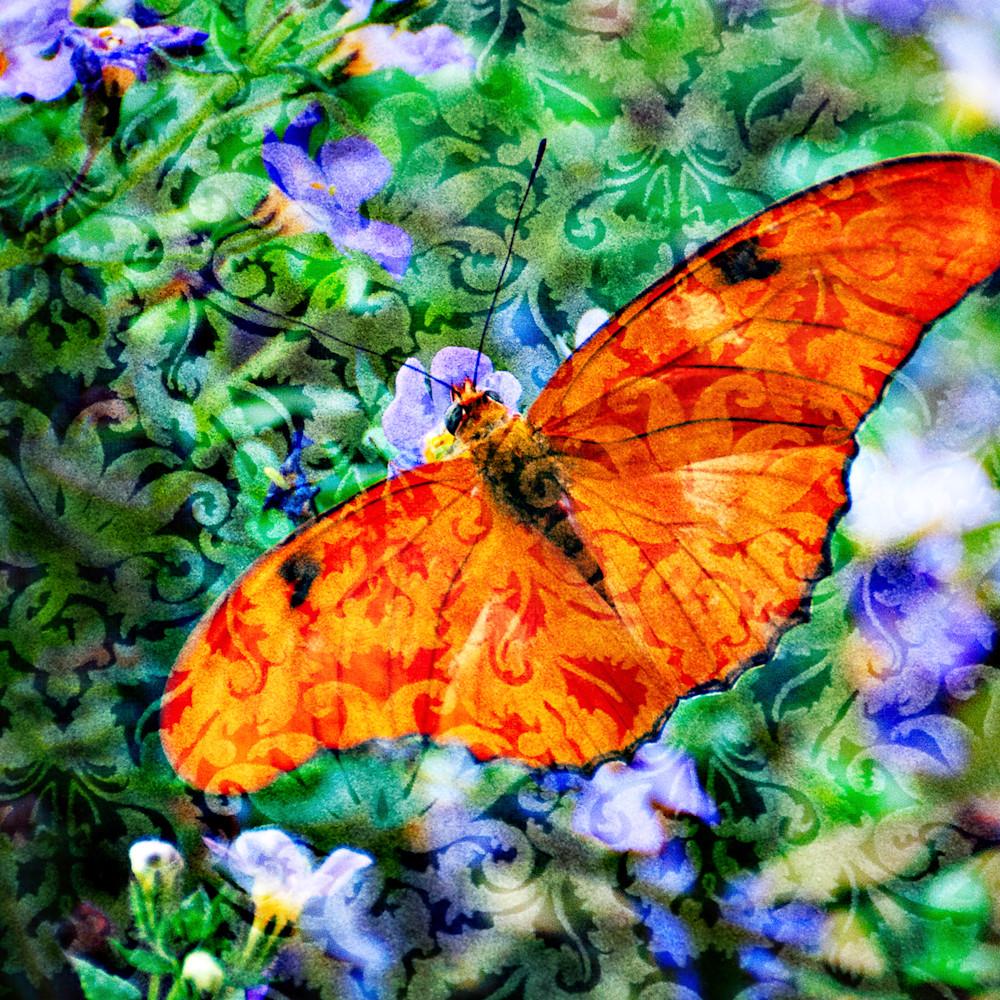 Magical orange butterfly rhi9hs