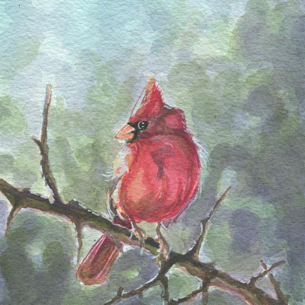 Cardinal i5ilfy