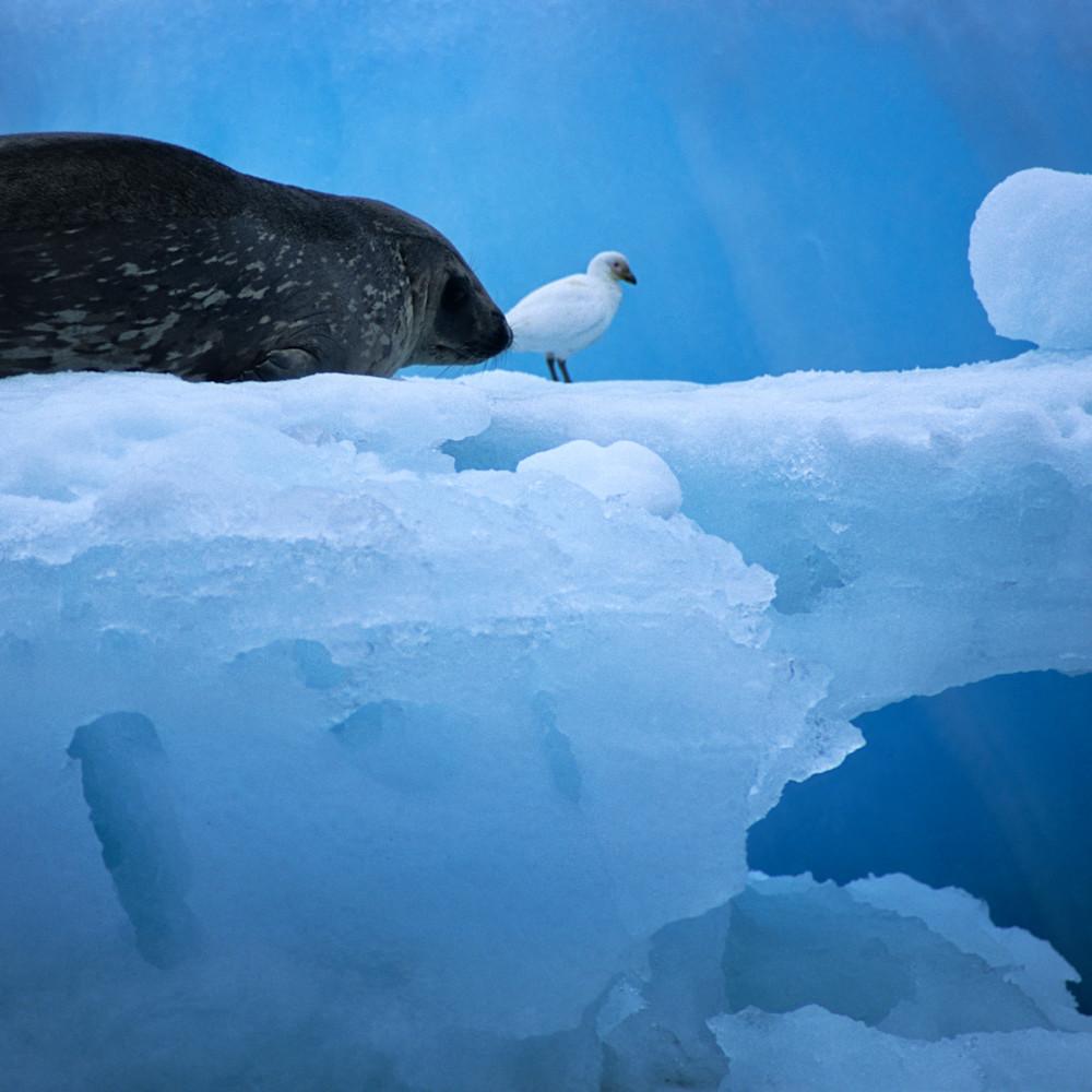 Sealwithbird100 z3ququ