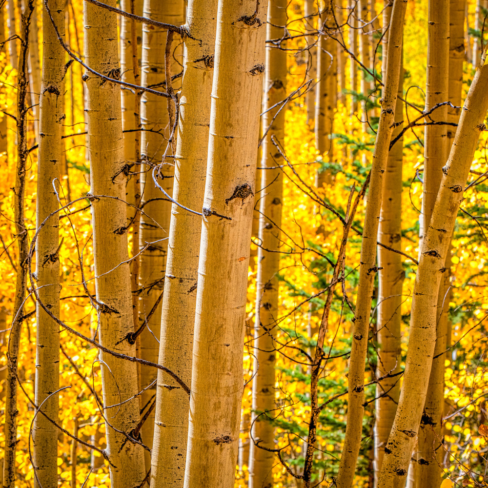 Andy crawford photography colorado aspens 6 byc0dd
