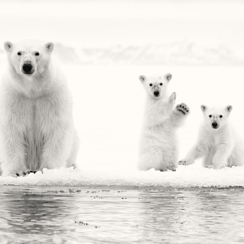 Ice bears grayscale100 nerh0h