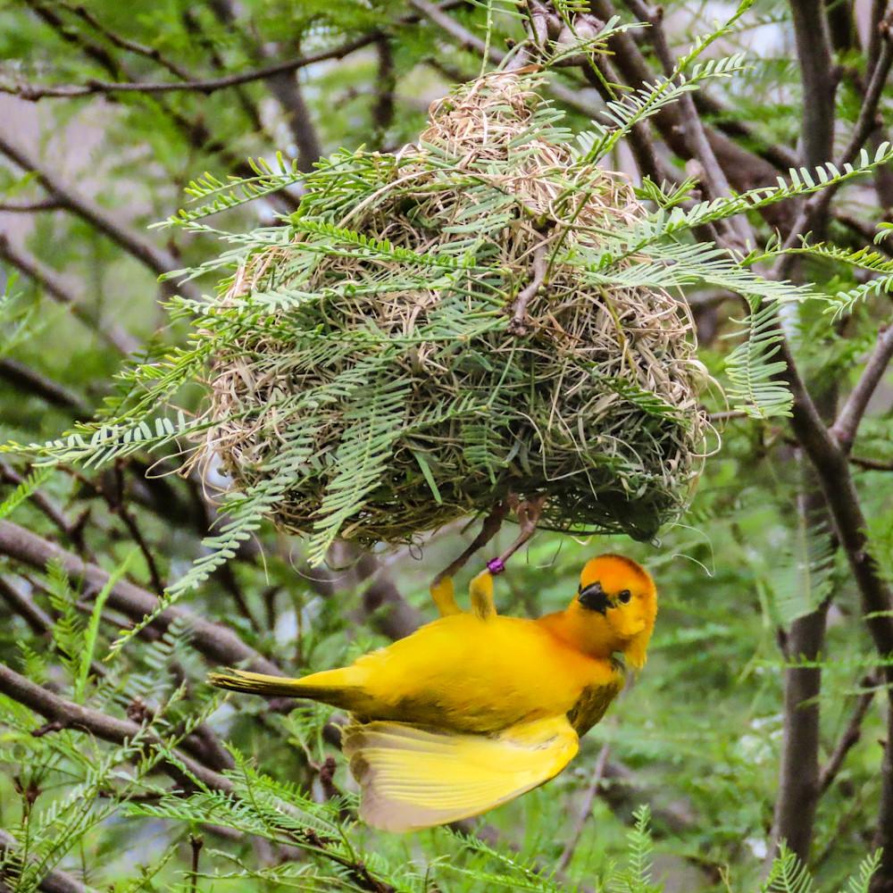 Tending the nest ashtja