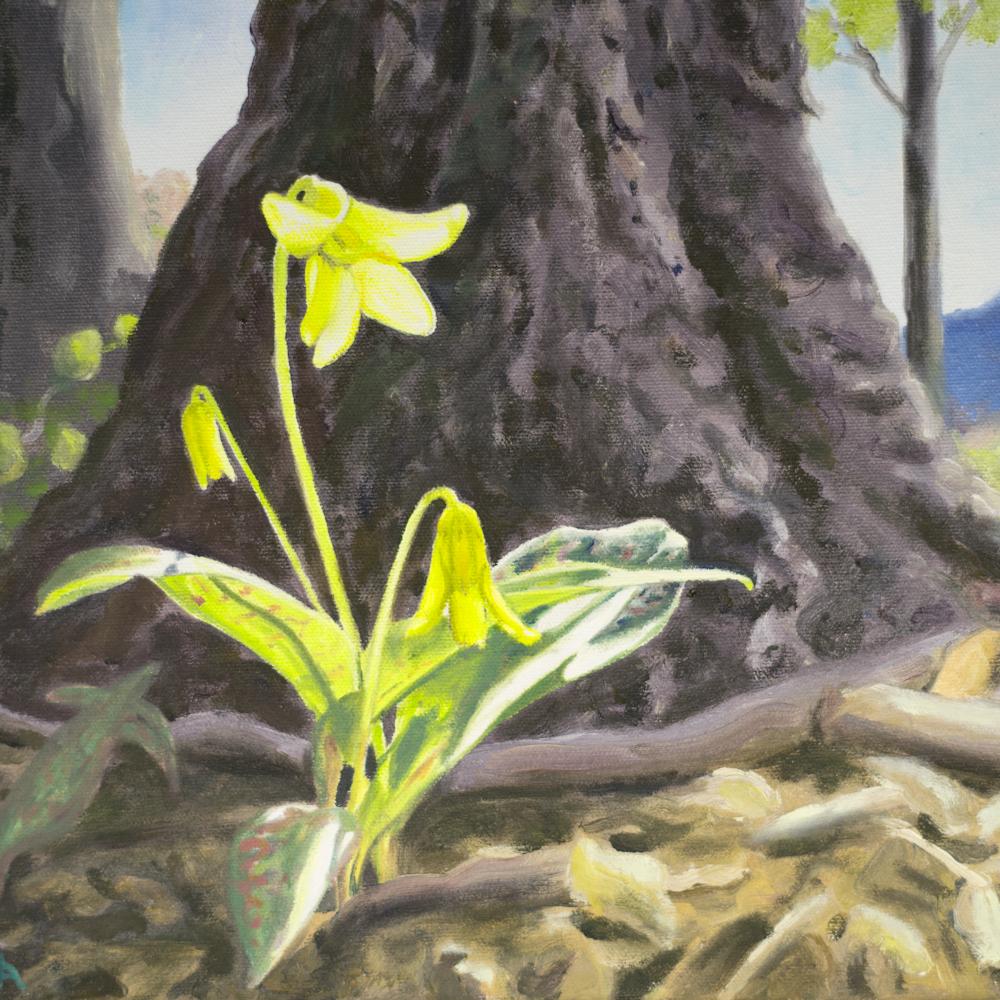 Trout lily rigo2a