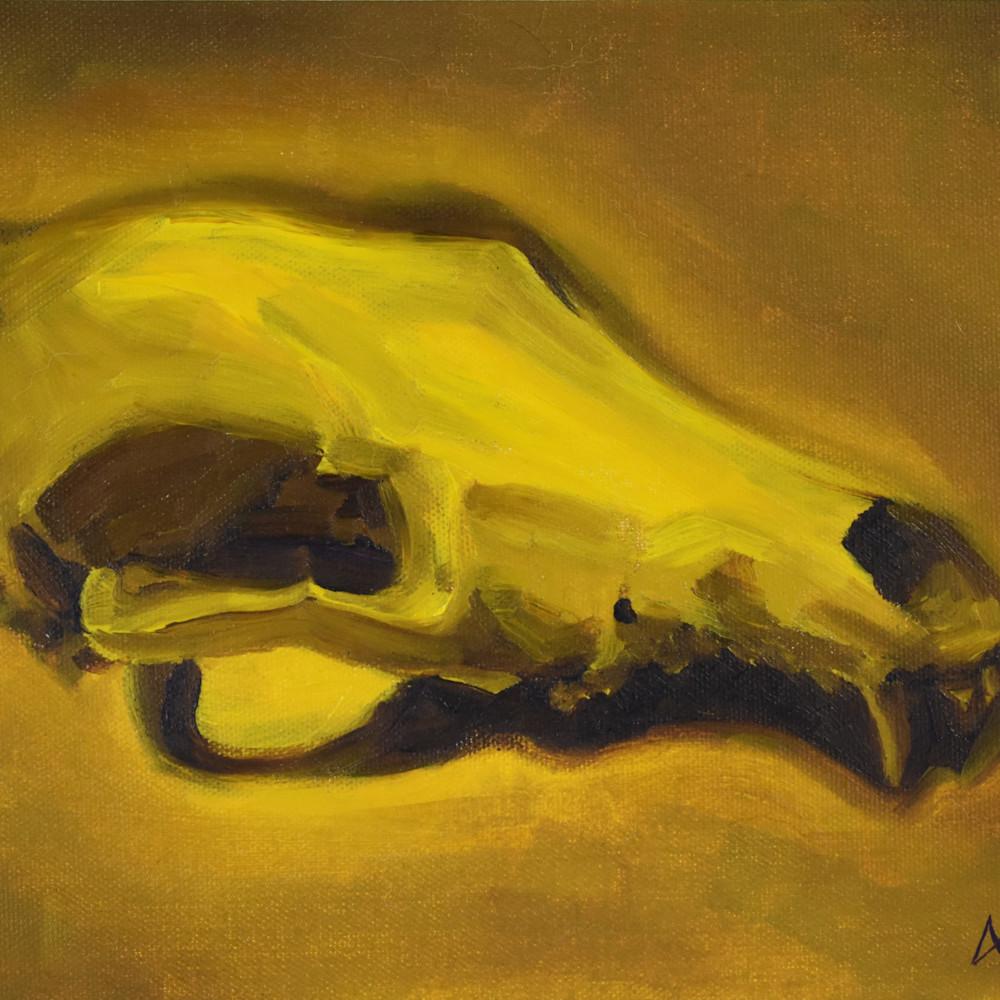 0040 coyote skull 2 300dpi oatfcz