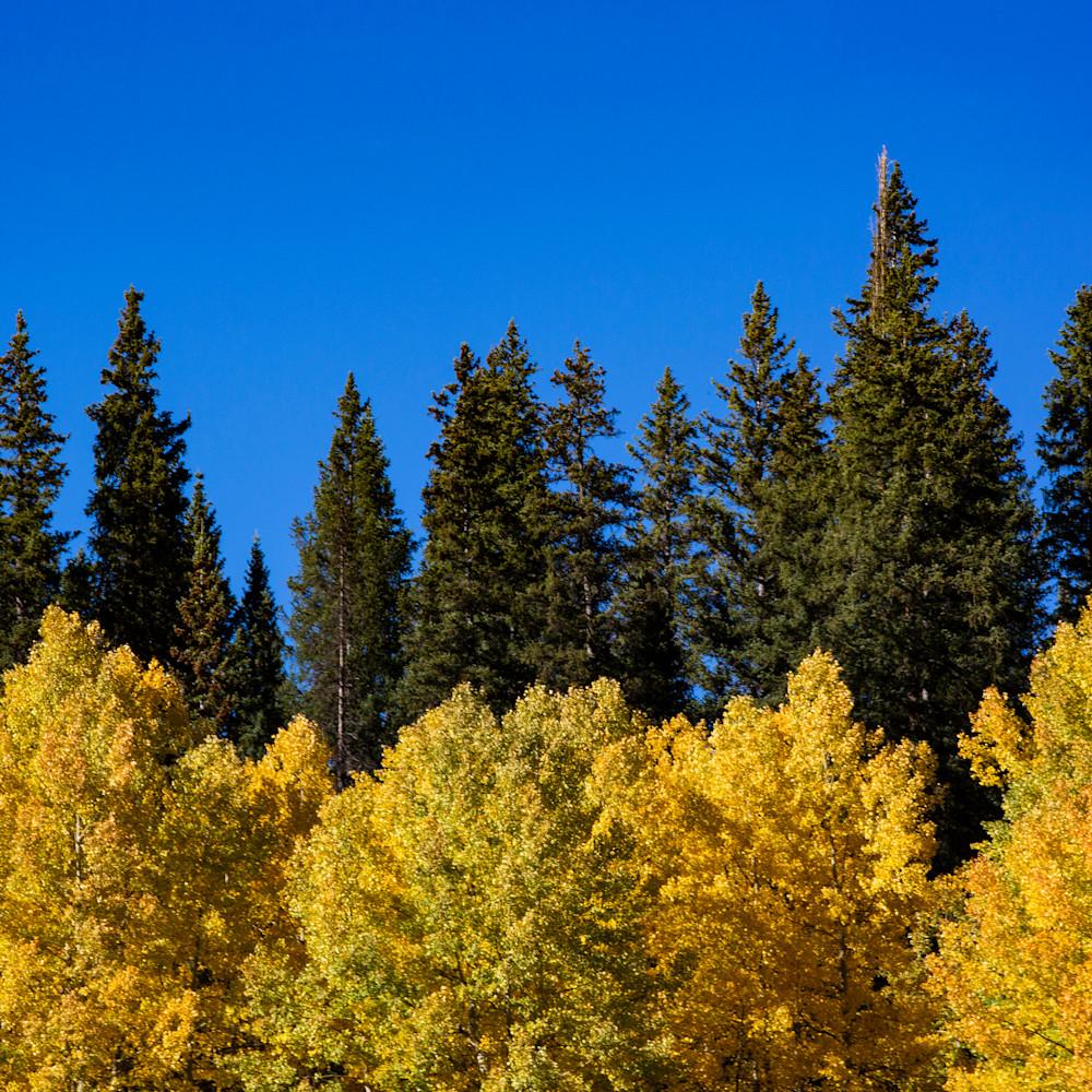Aspen pine sky nzfrrf