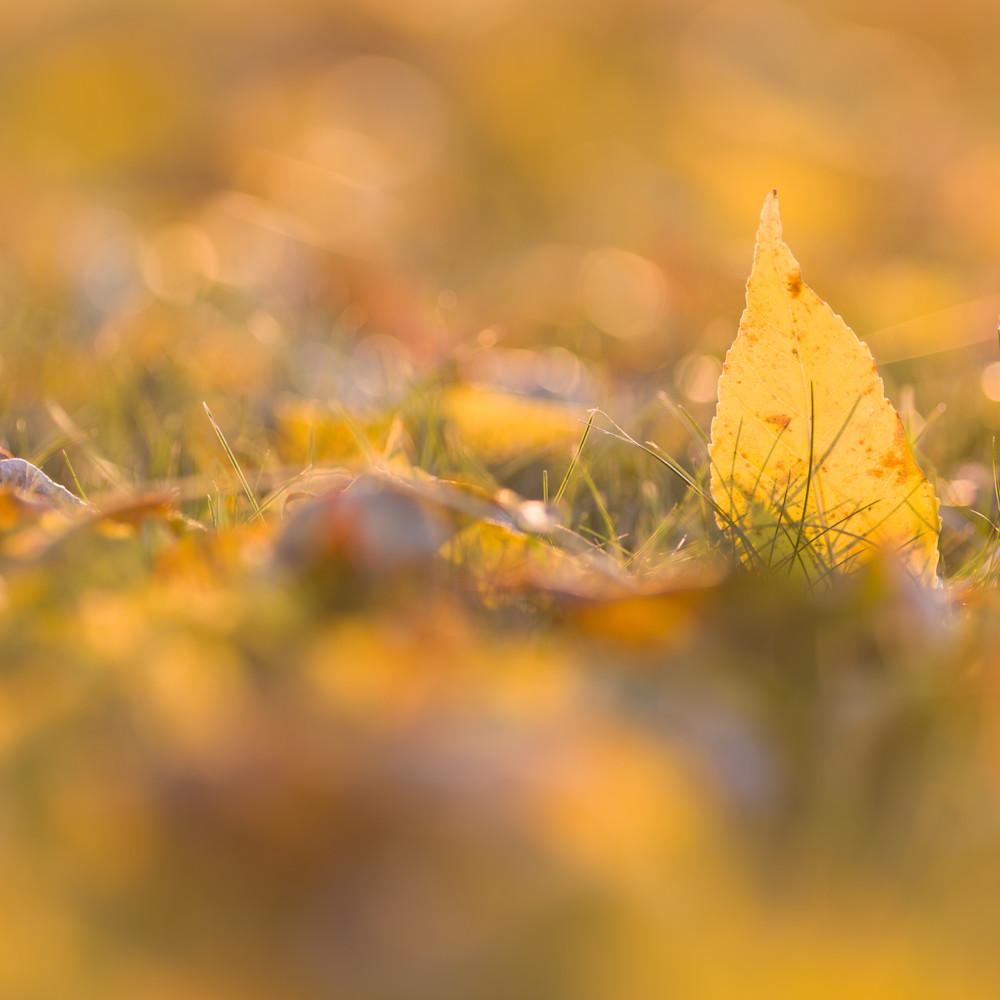 Autumn ash 4873 mjh0wm