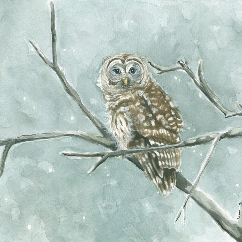 Barred owl final ipfnx1