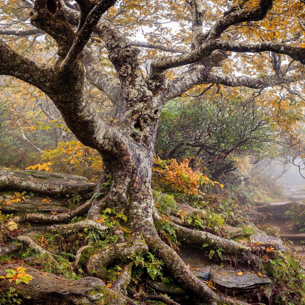 Autumn birch votffy