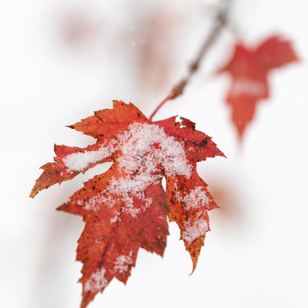 Autumn snow e14997 nubucr