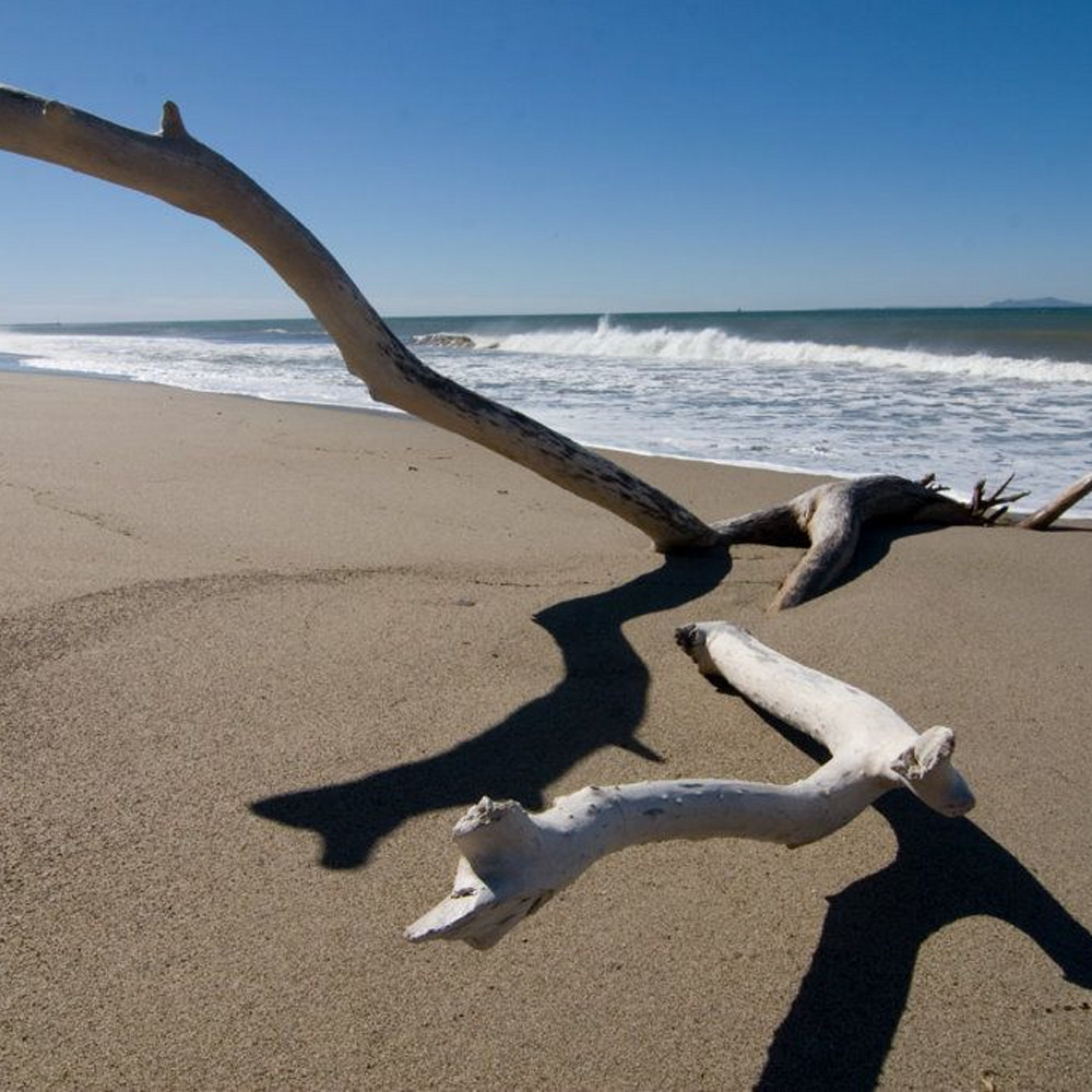 Driftwood and surf lh1i7t
