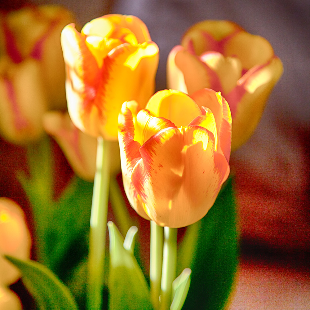 Tulips thkia9