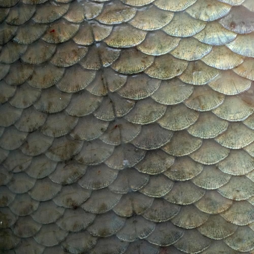Fish scales x7myyi