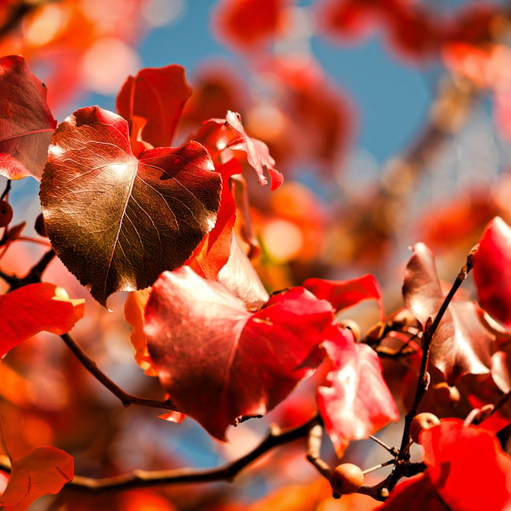 Fall colors 4 lenwk5
