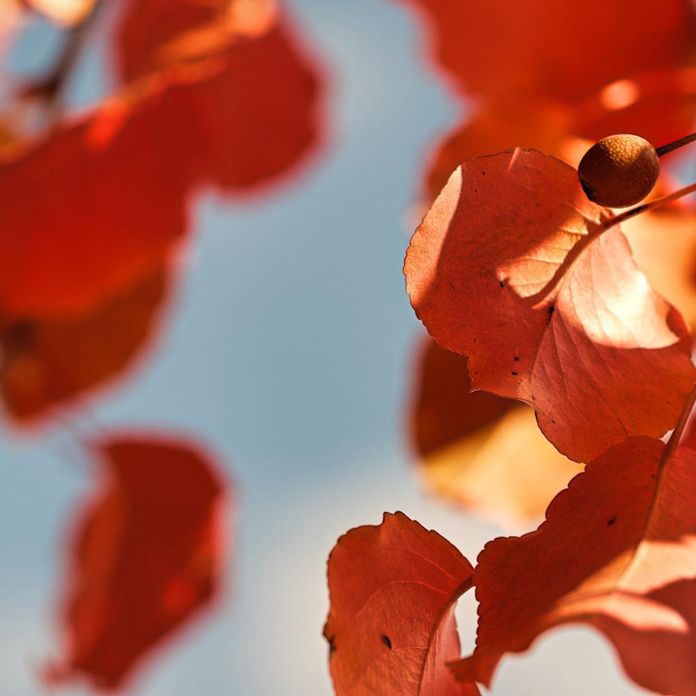 Fall colors 9 jtqrl8