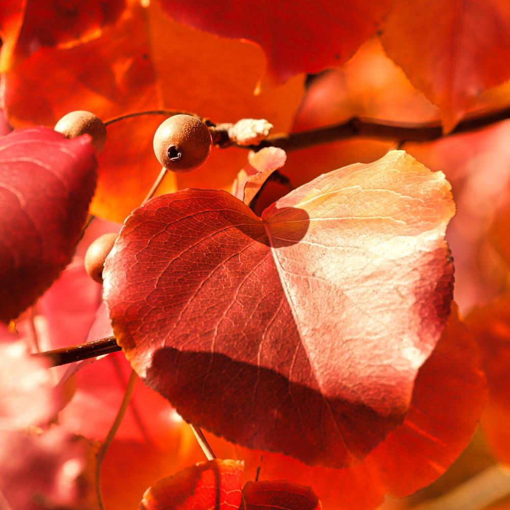 Fall colors 5 eq3iuf