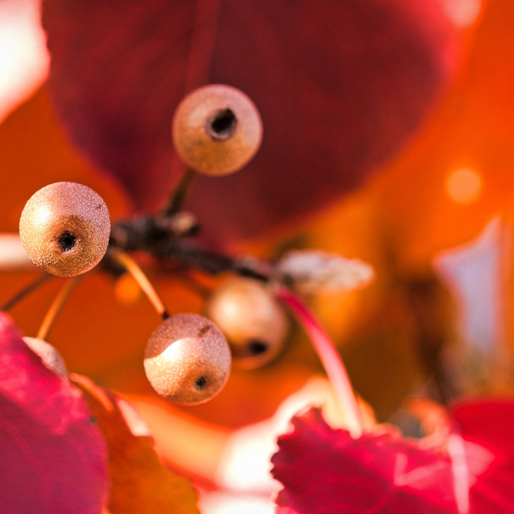 Fall colors 12 zplg5m