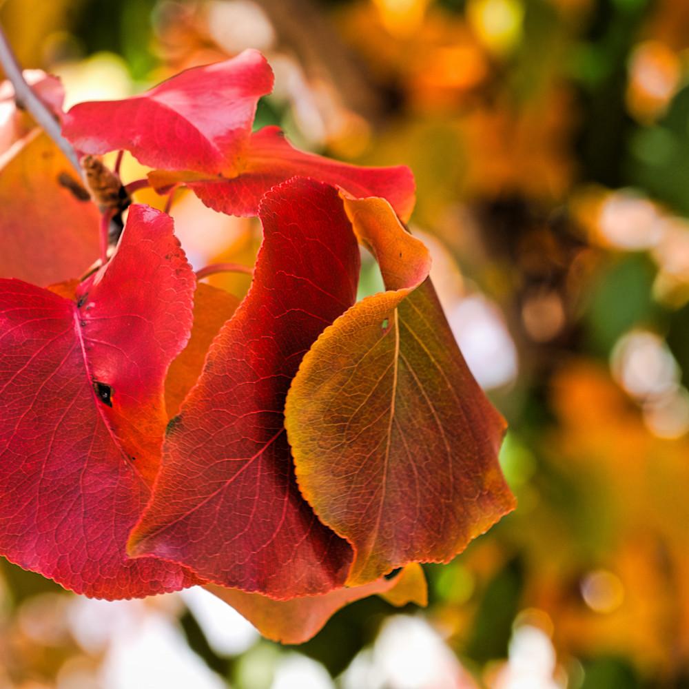 Fall colors 14 n3blp7