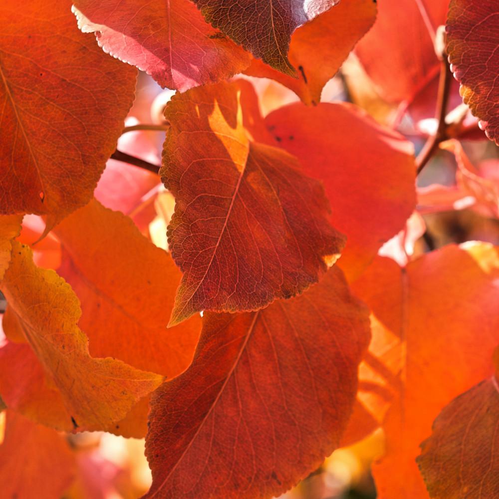 Fall colors 16 ltvm9t