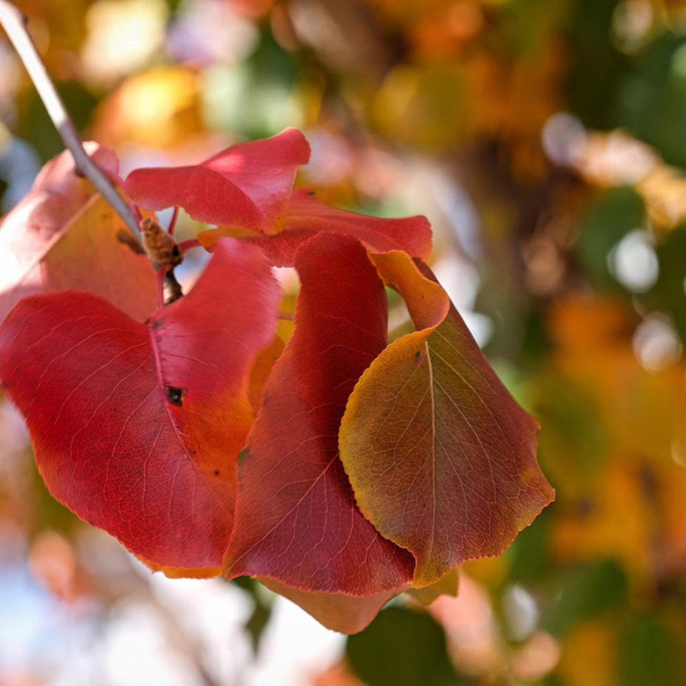 Fall colors 15 u0a9oa