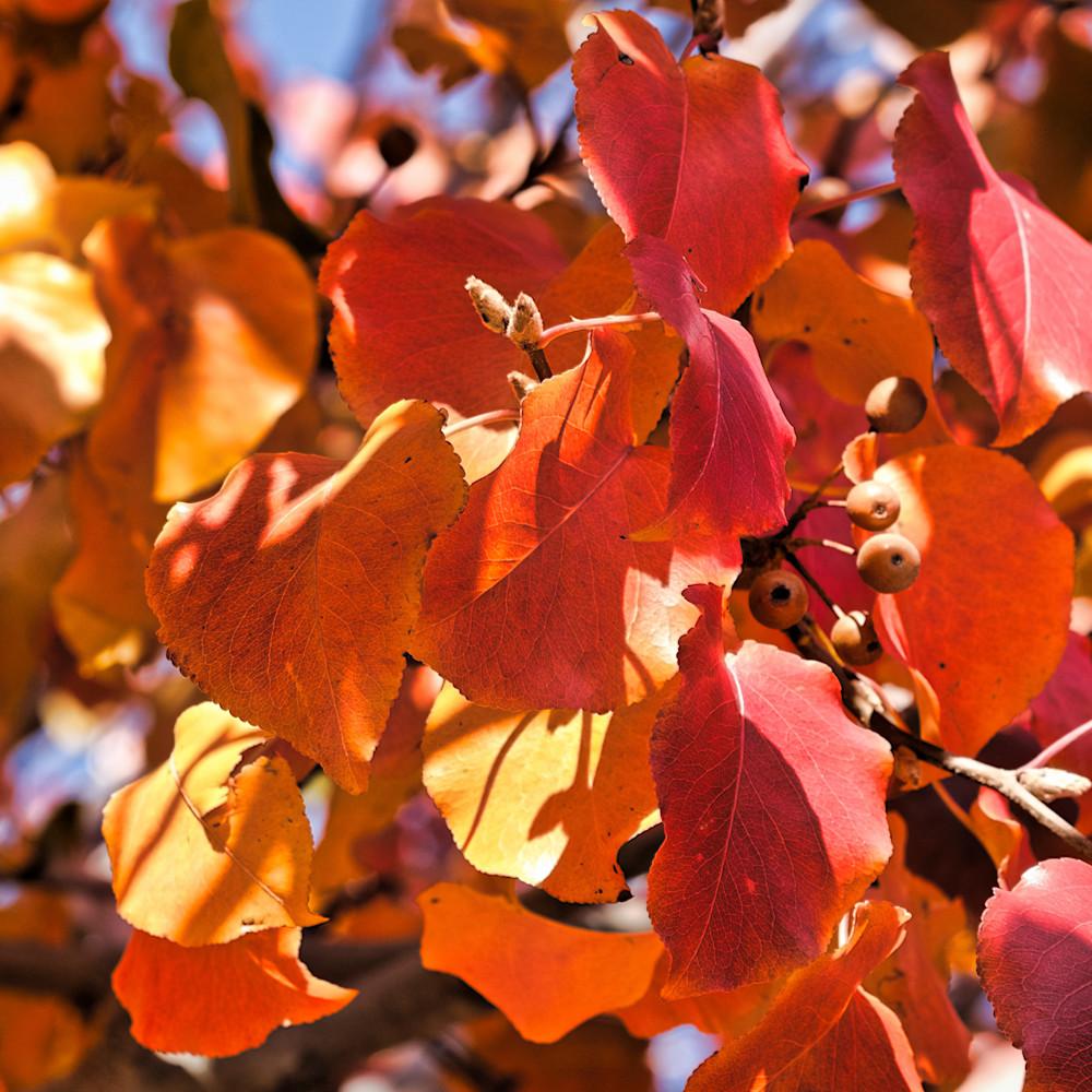 Fall colors 17 fdlq9m