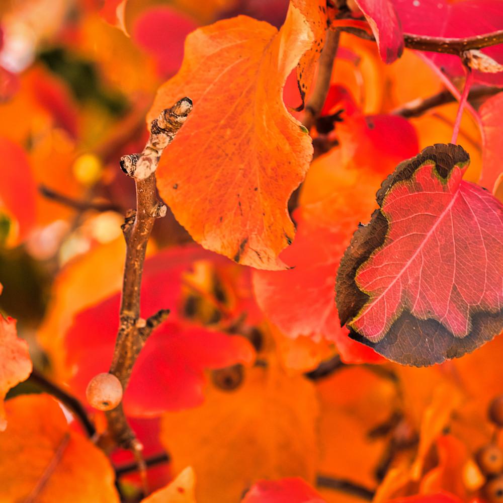 Fall colors 22 j3wleo